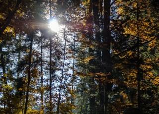 Paysage de Haute-Savoie en automne - A Eteaux - le 1r novembre 2011 - photo : Gilles Bertrand