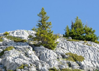 paysage de sapin et de rocher dans les alpes Françaises, au grand bornand le 16 juin 2013, photo Gilles BERTRAND