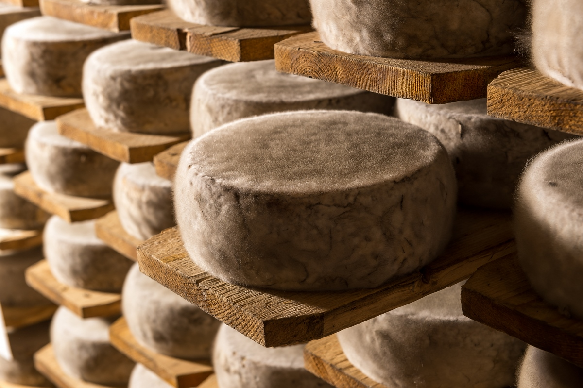 CAVE-AFFINAGE-FROMAGE-TOMME-SAVOIE